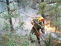 Brûlage dirigé Maures 1 30-I-2006.jpg