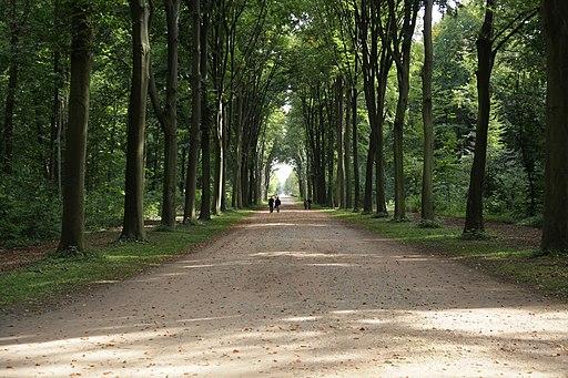 Brühl - Schloss Augustusburg - Schlosspark - Falkenluster Allee 01 ies