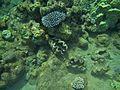 Braconnage à Mayotte 2.jpg