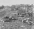 Brady, Mathew B. - Auf dem Antietam Schlachtfeld (Zeno Fotografie).jpg