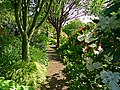 Branklyn Garden - geograph.org.uk - 1330895.jpg