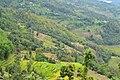 Breathtaking hills of Khandbari (9268946315).jpg