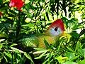 Brevard Zoo Australian Animals - Flickr - Rusty Clark (13).jpg