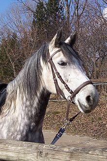 Morso (equitazione)