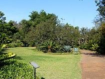 Broodboomtuin, a, Pretoria Nasionale Botaniese Tuin.jpg