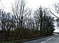Brook Wood, Crank - geograph.org.uk - 367520.jpg