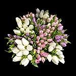 Bunch tulip Paris 2011.jpg