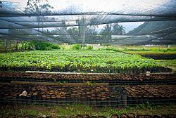 Wikizero Agricultura En Costa Rica