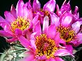 Cacti flowers in studio.jpg
