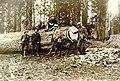 Calaveras Grove. Calaveras Big Trees State Park? L to R- A. C. Oullahan, ?, Horace M. Albright, Charles Pearson, and Stephen T (63ad83885b1447a787120c951de973e3).jpg