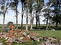 Campo - panoramio (28).jpg