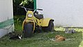 Caronport Cats (1410728802).jpg