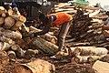 Casseur de bois 8.jpg