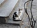 Cat E20.jpg