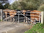 File:Cattle at the gate to Offenham Park - geograph.org.uk - 626279.jpg