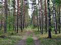 Cekule, Stopiņu novads, LV-2118, Latvia - panoramio (3).jpg