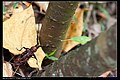 Cerambycidae (7049515163).jpg