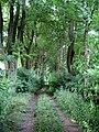 Cesta mezi Boňkovským rybníkem a rybníkem U Dubu.jpg