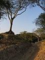 Chandraketugarh Mound - Berachampa 2012-02-24 2515.JPG