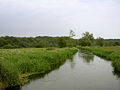 Channel in the Avon floodplain east of Fordingbridge - geograph.org.uk - 24338.jpg