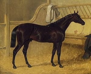 Charles the Twelfth - Charles XII Winner 1839 St. Leger by John Frederick Herring