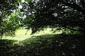 Church of St Mary the Virgin, Woodnesborough, Kent - churchyard yew shade.jpg