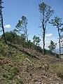 Cima del monte Castiglion Maggio (756 m. s.l.m.) - panoramio.jpg