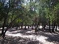 Cipreses (Tricahues). - panoramio (3).jpg