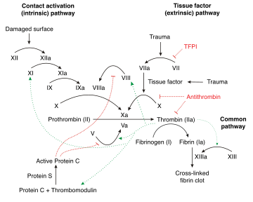 Schematic diagram of the blood coagulation and protein C pathways. In the blood coagulation pathway, thrombin acts to convert factor XI to XIa, VIII to VIIIa V to Va, fibrinogen to fibrin. In addition, thrombin promotes platelet activation and aggregation via activation of protease-activated receptors on the cell membrane of the platelet. Thrombin also cross over into the protein C pathway by converting protein C into APC. APC in turn converts factor V into Vi, and VIIIa into VIIIi. Finally APC activates PAR-1 and EPCR.