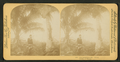 Cocoanut (Coconut) trees, Fla., U.S.A. Coconuese baume, from Robert N. Dennis collection of stereoscopic views 2.png