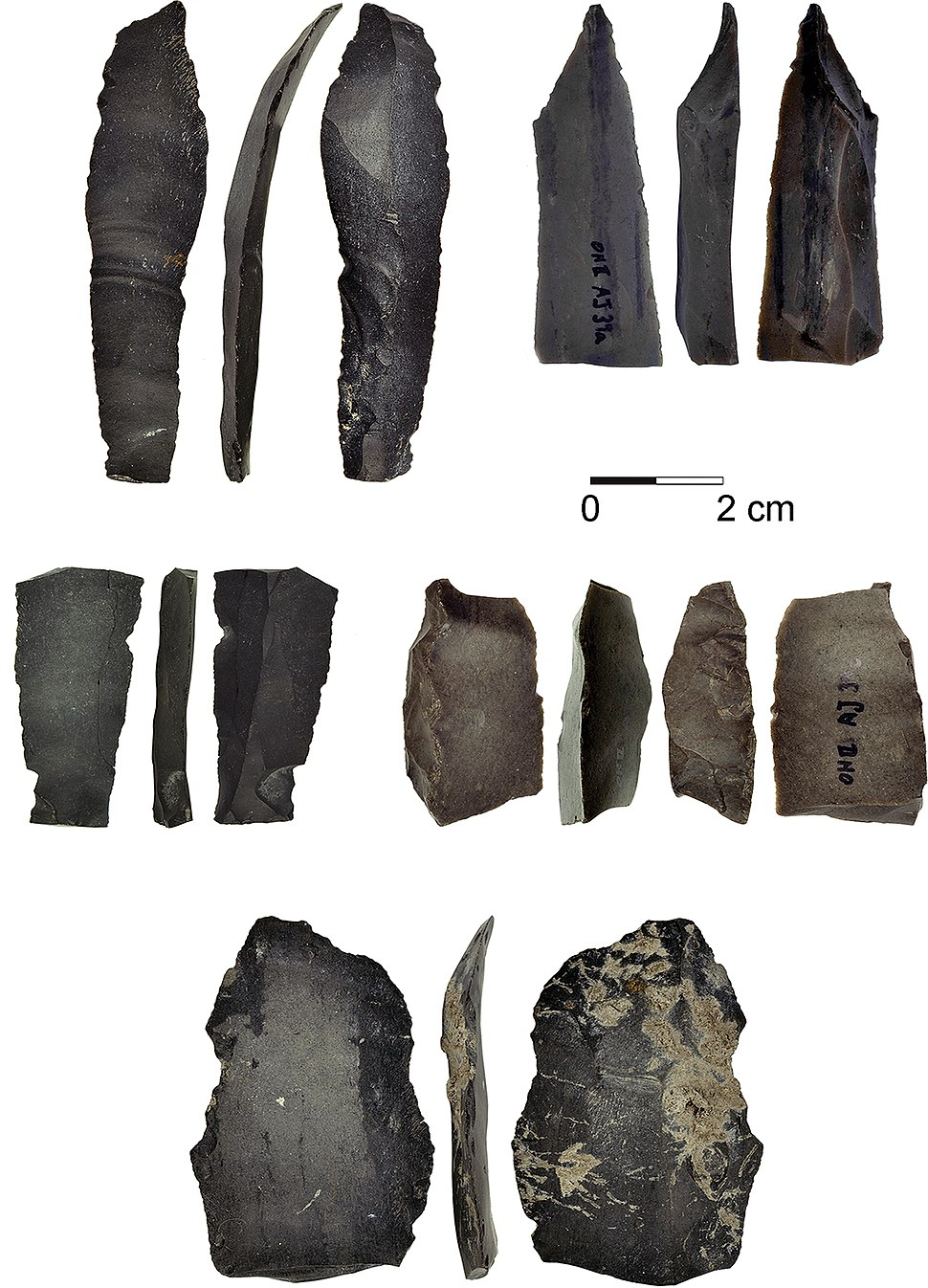 Composite Sickles for Cereal Harvesting at 23,000-Years-Old Ohalo II, Israel