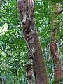 Cool Liana - Flickr - treegrow.jpg