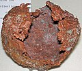 Copper skull (Mesoproterozoic, 1.05-1.06 Ga; Keweenaw Peninsula, Upper Peninsula of Michigan, USA) 7.jpg