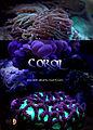 Coral ( by asad bunashi).jpg