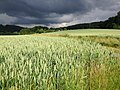 Corn Field And Thunder (189659871).jpeg