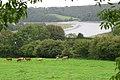 Cornwall-02-Tamar-River-2004-gje.jpg