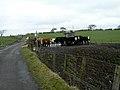 Cows Near Southfield - geograph.org.uk - 147234.jpg