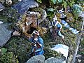 Crib in Via Bronia (Galletto,Vaiano) 05.jpg