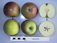 Cross section of Amanishiki, National Fruit Collection (acc. 1953-013).jpg