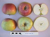 Cross section of Cretesc Rosu, National Fruit Collection (acc. 1958-099).jpg