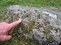 Cup marked rock - geograph.org.uk - 542371.jpg