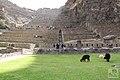 Cusco - Peru (20572252768).jpg