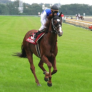 Daiwa Major - Daiwa Major at Tokyo Racecourse in 2005