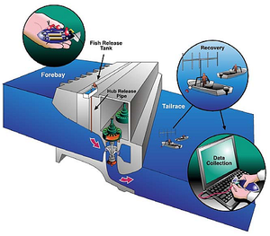 Sensor fish - Image: Data acquisition process