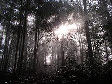 Sunlight shining through the trees in Borneo