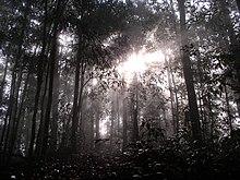 Madaling Araw sa Borneo