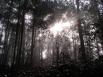 Wildlife of Malaysia - Dawn in the Bornean Rainforests