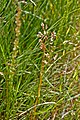 Day 3- Pinkham Bay salt marsh (16334460992).jpg