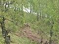 Deer, Glen Truim - geograph.org.uk - 531951.jpg
