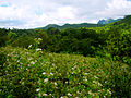 Descending Mt. Mataas na Gulod towards the Dos Picos Valley of the Palay-Palay-Mataas-na-Gulod Protected Landscape of Cavite.jpg